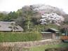 春(新林公園).JPGのサムネール画像のサムネール画像のサムネール画像のサムネール画像